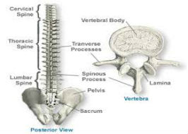 OSTEOPOROSIS VS SPINAL STENOSIS The Treatment Dilemma