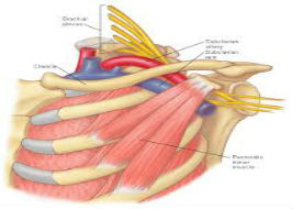 The Thoracic Outlet: Shoulder Assessments and the Coraco-Pectoral Loop Course