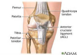 Recent Advances in the Rehab of ACL Injuries