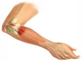 Soft Tissue Injuries of the Elbow